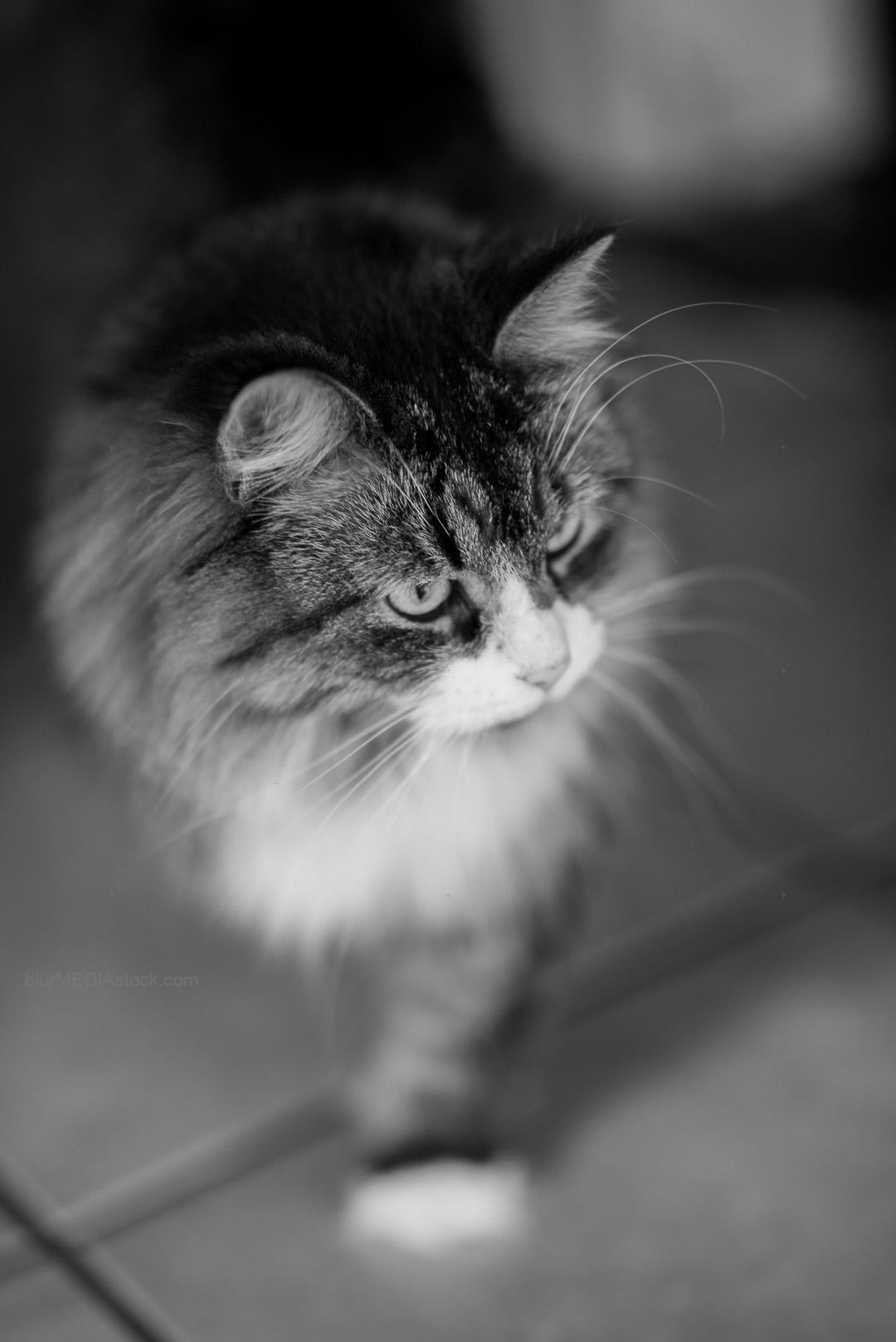 Cat walking across a tile floor