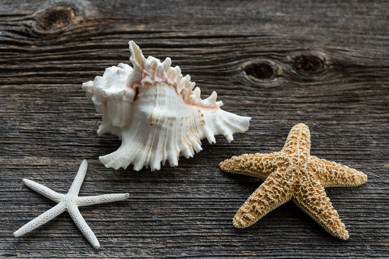 Trendy Stylish Starfish and Seashell on Vintage Barn Board With
