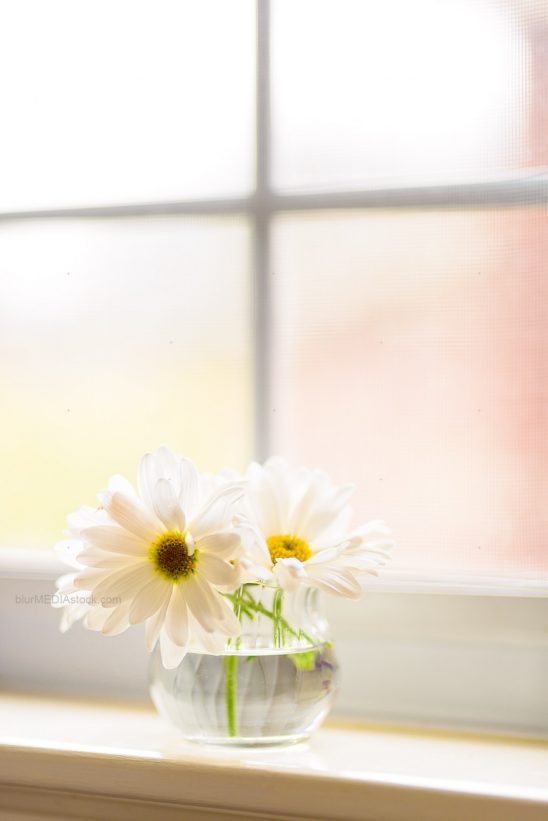 Daisies in a jar on a windowsill